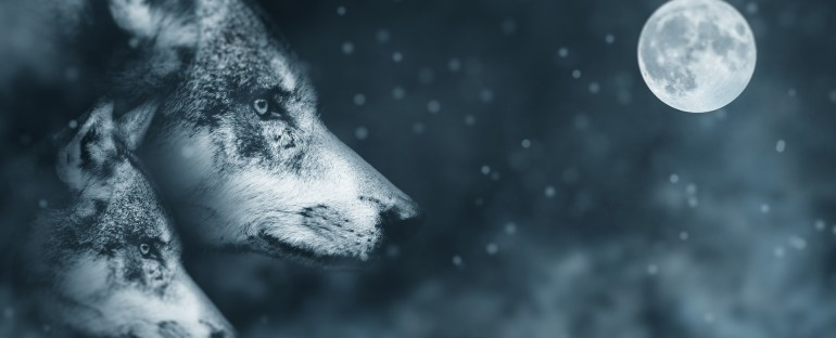 Russia – Wolves and the Space Program